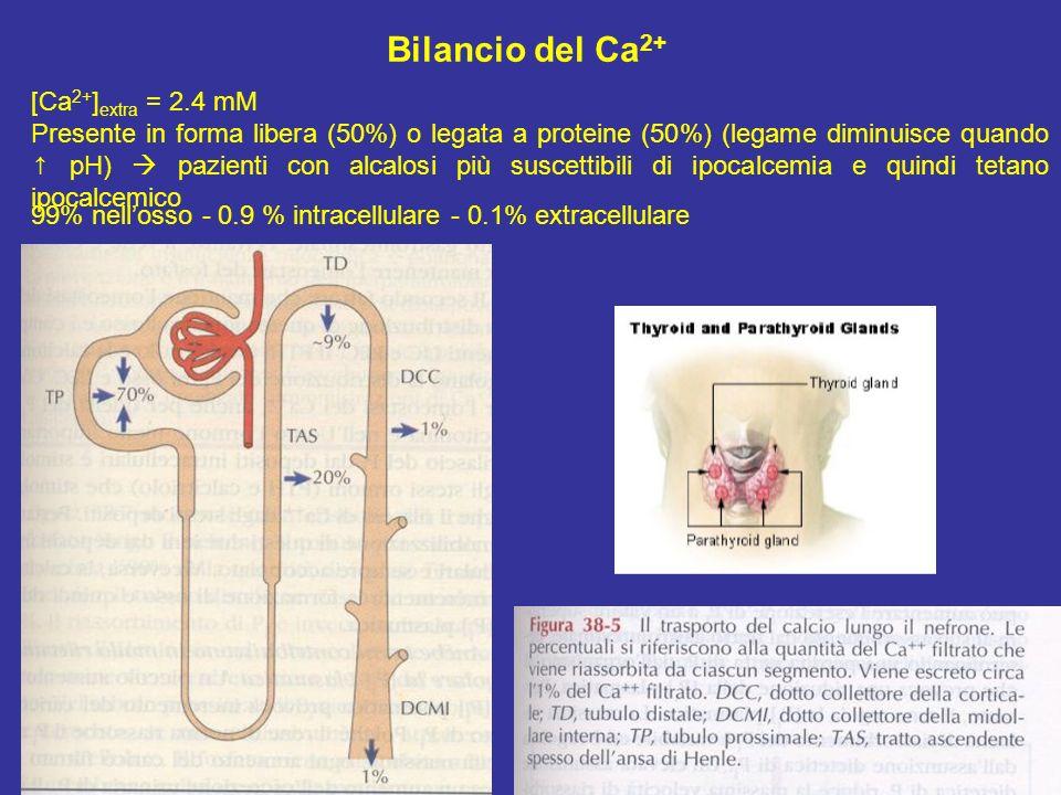 Bilancio del Ca2+ [Ca2+]extra = 2.4 mM